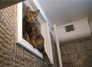 Окно из кухни в ванную. СССР
