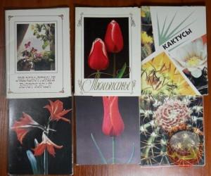 Комнатные растения, Тульпаны, Кактусы