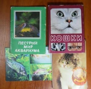 Пестрый мир аквариума, Кошки