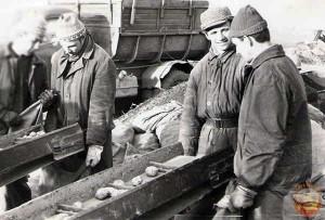 На картошке в СССР