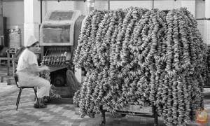 производство сушек в ссср
